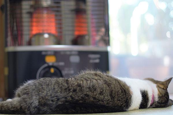 石油ストーブの前で温まる猫